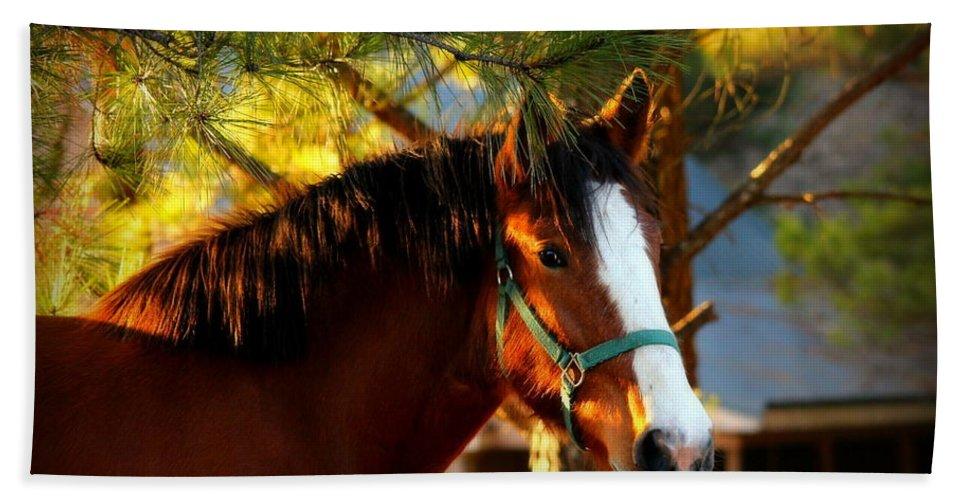 Reid Callaway Horse Hand Towel featuring the photograph Sunset Horse by Reid Callaway