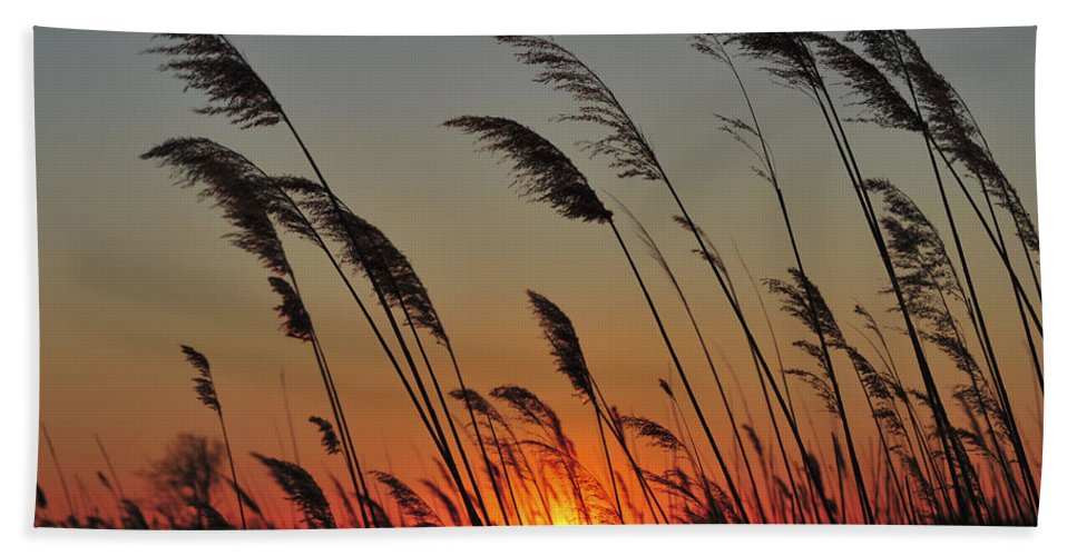 Reeds Hand Towel featuring the photograph Sunset Island Beach State Park Nj by Terry DeLuco