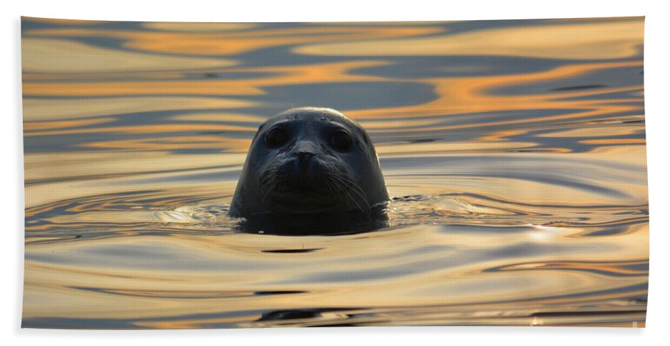 Seal Bath Sheet featuring the photograph Sunset Seal by Deanna Cagle