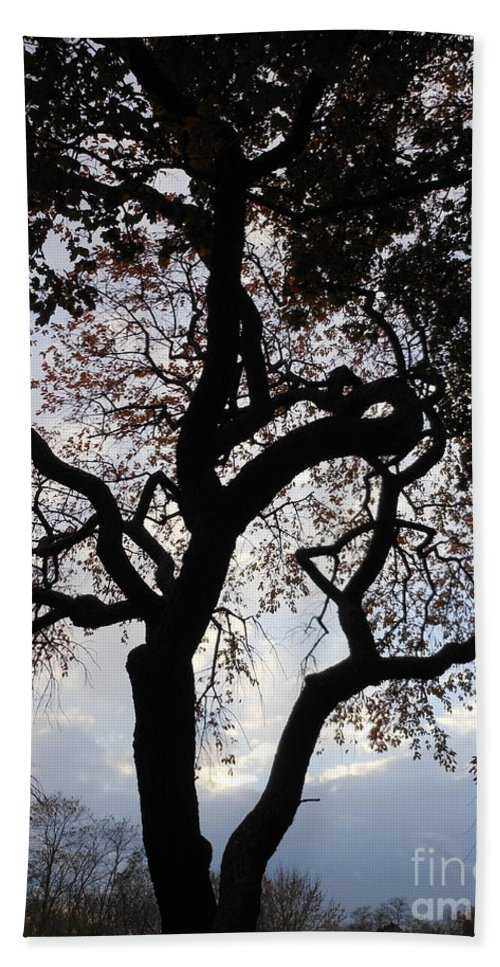 Tree Bath Sheet featuring the photograph Sunset Silhouette by Charlotte Stevenson