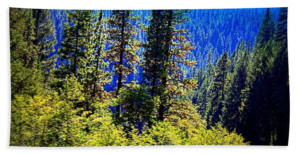 Acrylic Prints Hand Towel featuring the photograph Sunshine In The Forest by Bobbee Rickard