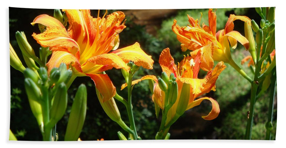 Daylily Bath Towel featuring the photograph Sunshine by Jean Blackmer