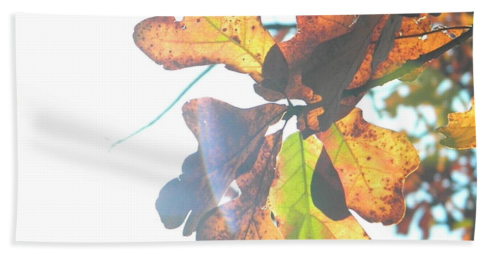 Sun Hand Towel featuring the photograph Sunshine Leaves by Nathanael Smith
