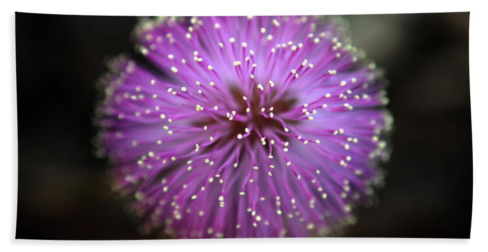 Floral Hand Towel featuring the photograph Sunshine Mimosa by Greg Allore