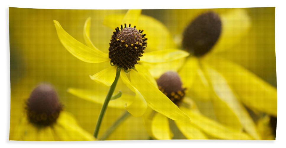 Yellow Coneflower Hand Towel featuring the photograph Sunshine On A Cloudy Day by Penny Meyers