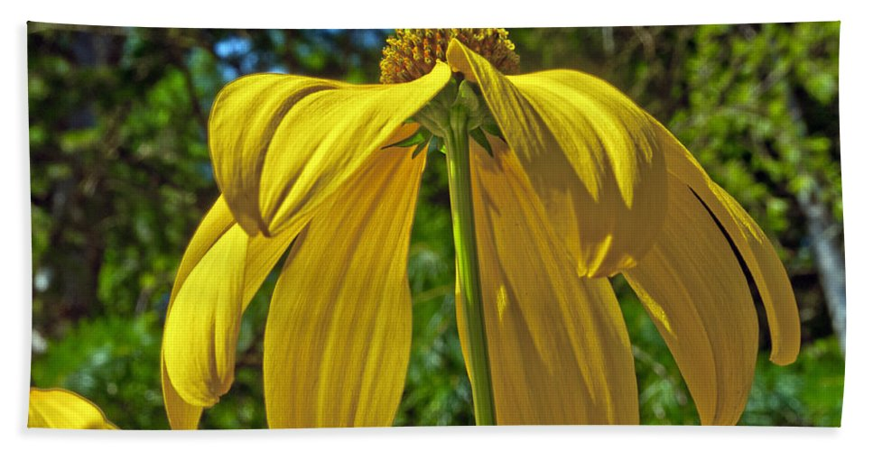 Garden Hand Towel featuring the photograph Sunshine On My Shoulders by Tikvah's Hope