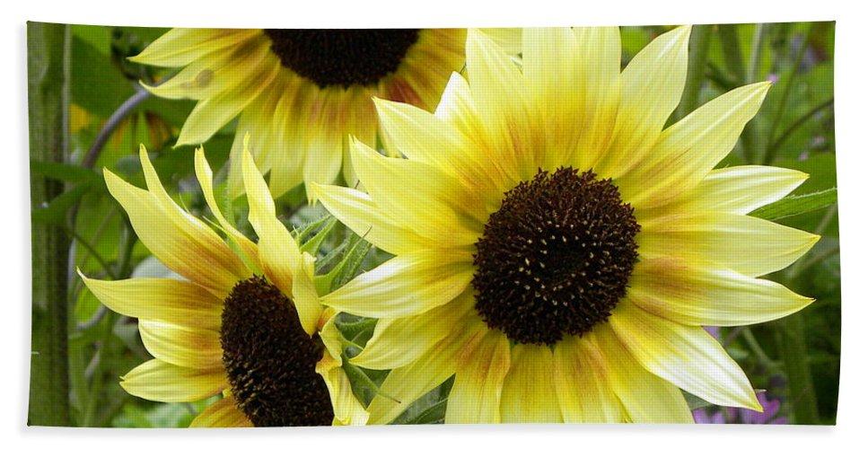 Sunflower Bath Sheet featuring the photograph Sunshine Trio by Brigitte Mueller