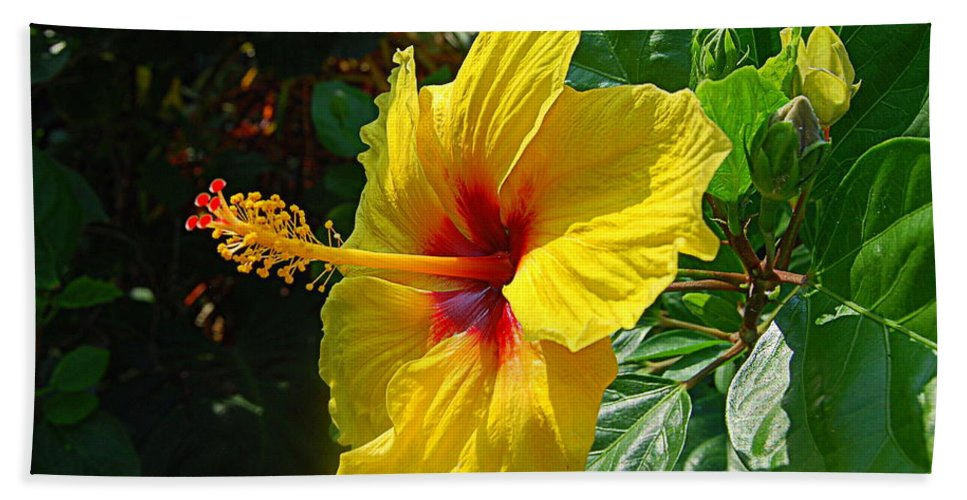 Hibiscus Bath Sheet featuring the photograph Sunshine Yellow Hibiscus With Red Throat by Catherine Sherman