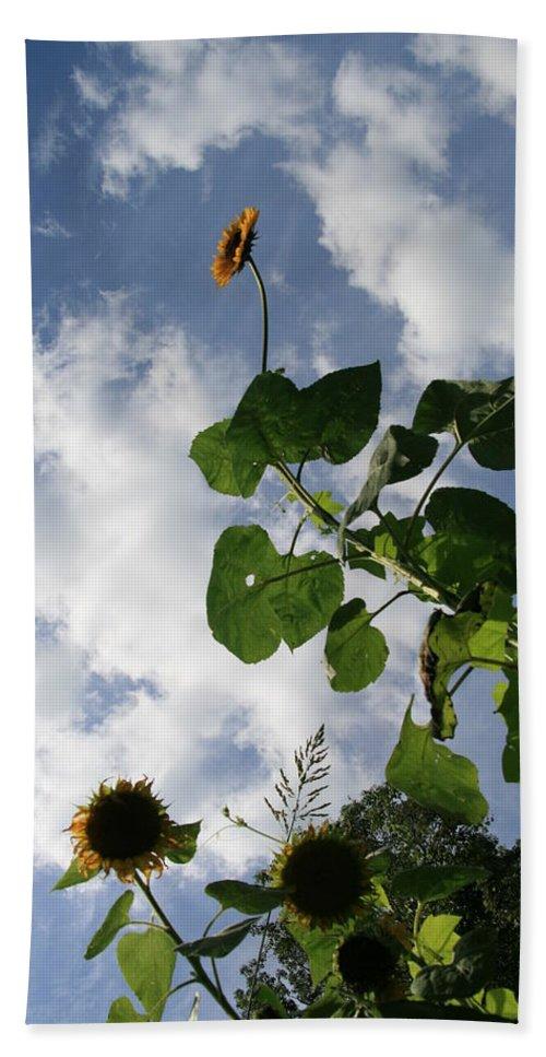Sunflower Bath Sheet featuring the photograph Super Sunflower by Neal Eslinger