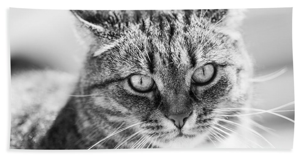 Cat Bath Sheet featuring the photograph Surprised Cat by Hakon Soreide