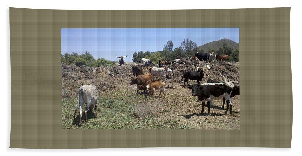 Cattle Bath Sheet featuring the photograph Surveying His Herd by Steve Scheunemann