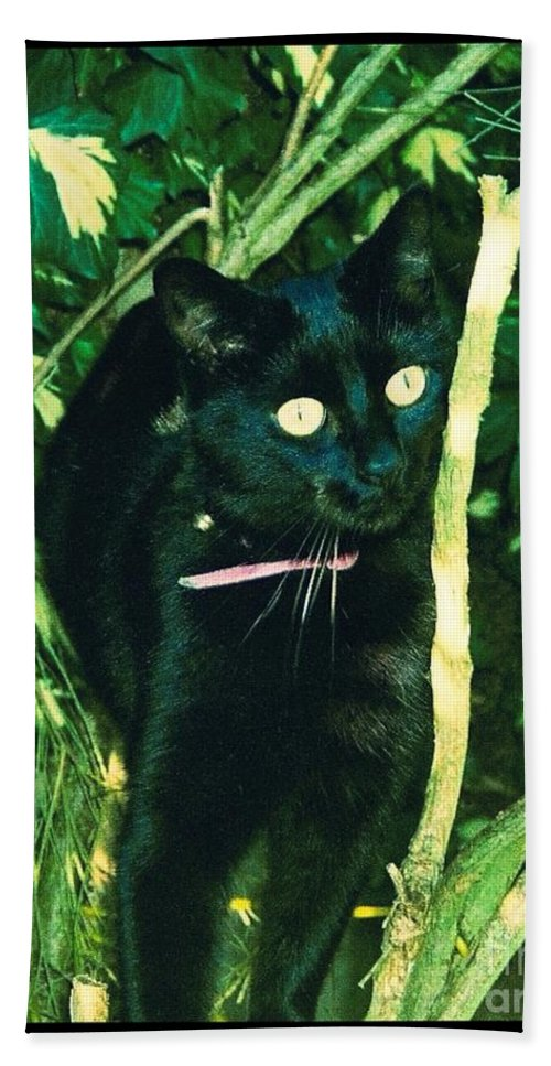 Black Cat Bath Sheet featuring the photograph Susie In Tree by Joan-Violet Stretch