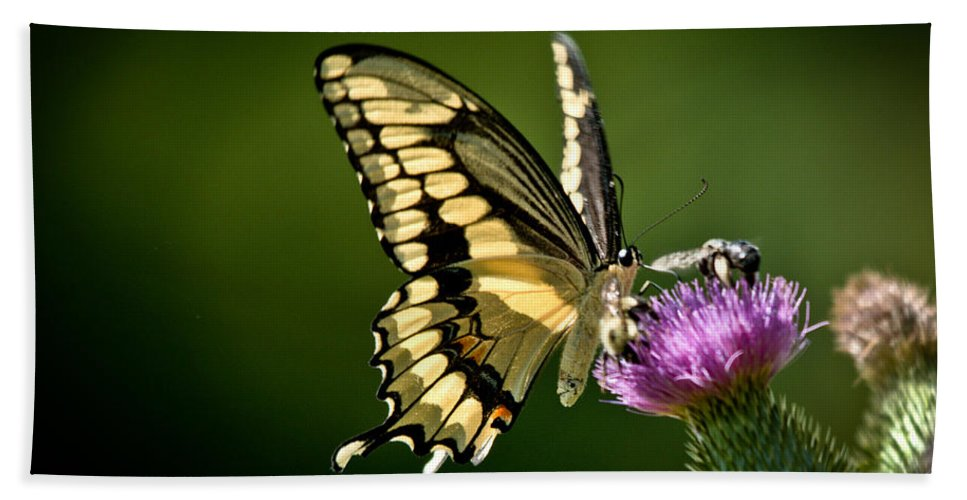 Hand Towel featuring the photograph Swallowtail And Friends by Cheryl Baxter