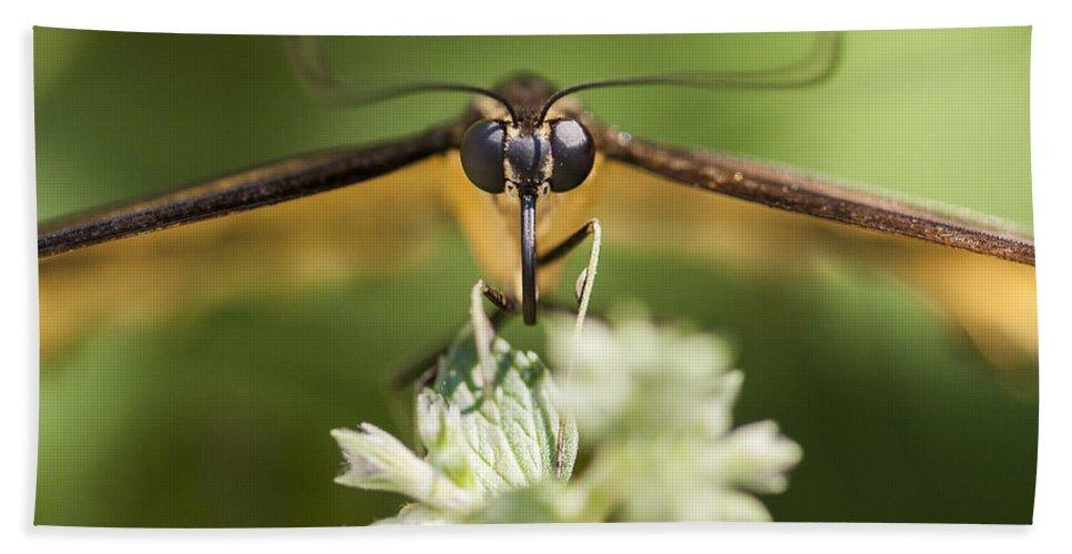 Macro Bath Sheet featuring the photograph Swallowtail Butterfly by Adam Romanowicz