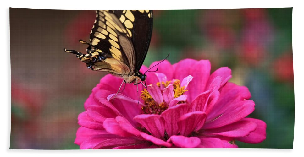 Swallowtail Hand Towel featuring the photograph Swallowtail Butterfly by Beth Sargent
