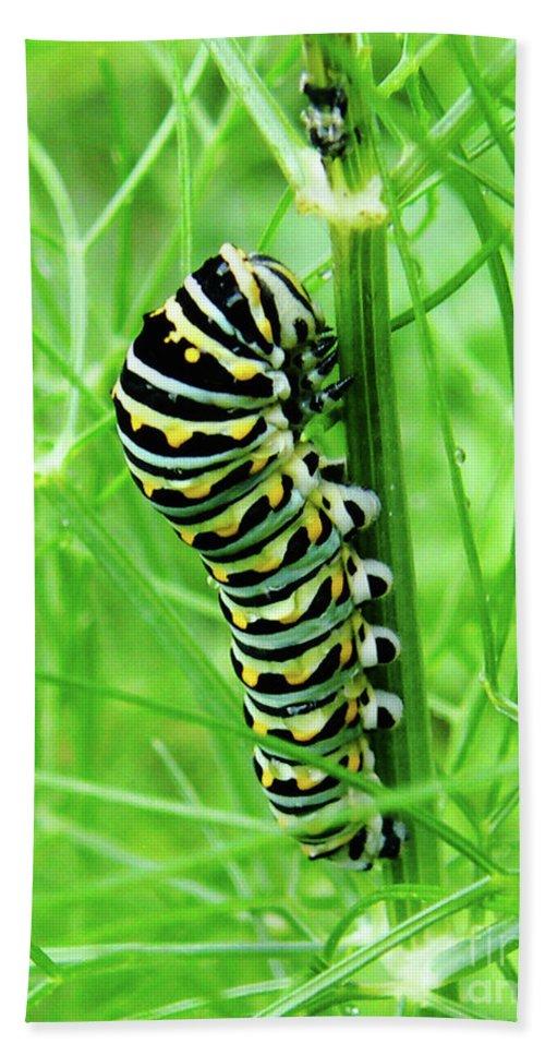 Caterpillar Hand Towel featuring the photograph Swallowtail To Be by Lizi Beard-Ward