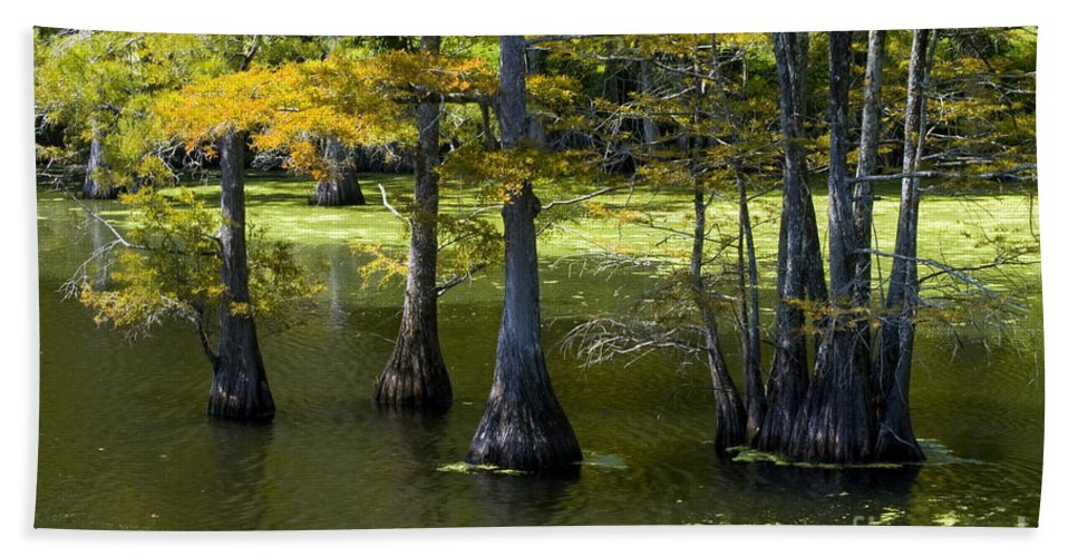 Black Bayou Lake National Wildlife Refuge Monroe Lousiiana Swamp Swamps Cypress Tree Trees Autumn Color Fall Colors Water Landscape Landscapes Hand Towel featuring the photograph Swamp Color by Bob Phillips