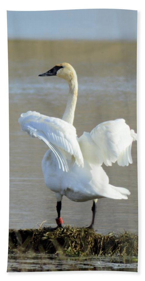 Swan Hand Towel featuring the photograph Swan Dance by Bonfire Photography