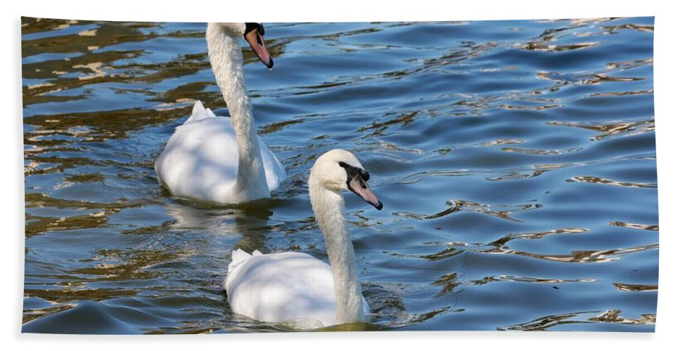 Swan Hand Towel featuring the photograph Swan Day by Carol Groenen