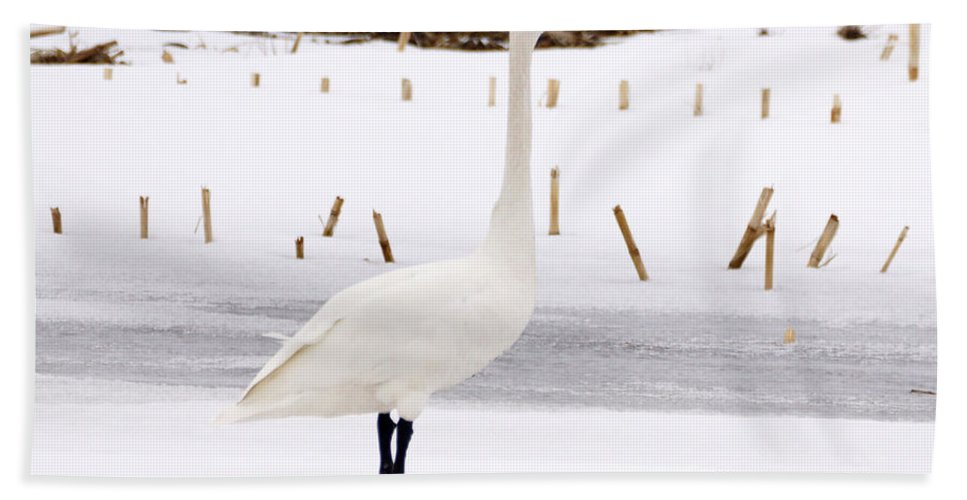 Swan Hand Towel featuring the photograph Swan by Lori Tordsen
