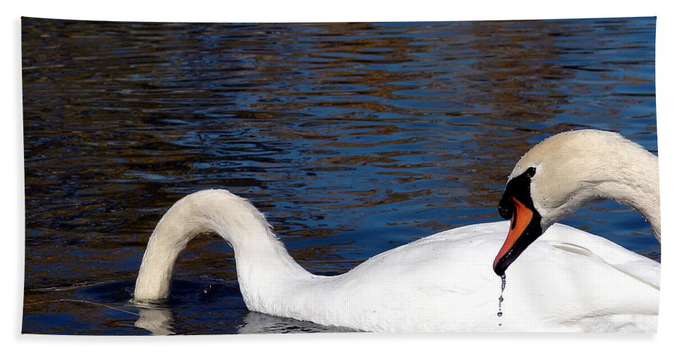 Swan Hand Towel featuring the photograph Swans by Cassie Peters
