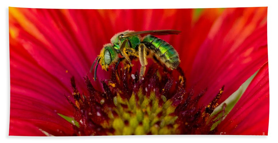 Animal Hand Towel featuring the photograph Sweat Bee Collecting Pollen by Anthony Mercieca