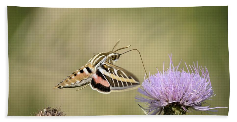 Moth Hand Towel featuring the photograph Sweet Delight by Bonfire Photography