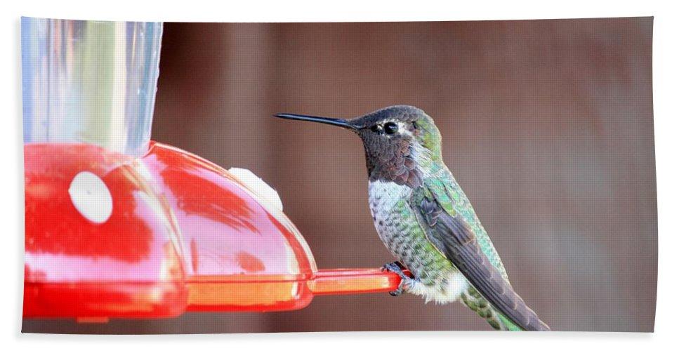Bird Bath Sheet featuring the photograph Sweet Little Hummingbird On Feeder by Carol Groenen