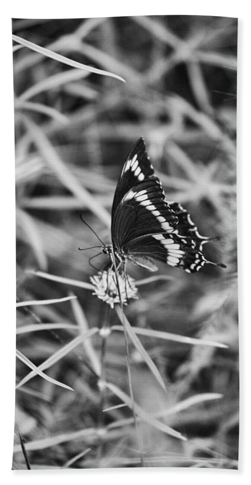 Butterfly Bath Sheet featuring the photograph Sweet Seduction Black And White by Douglas Barnard