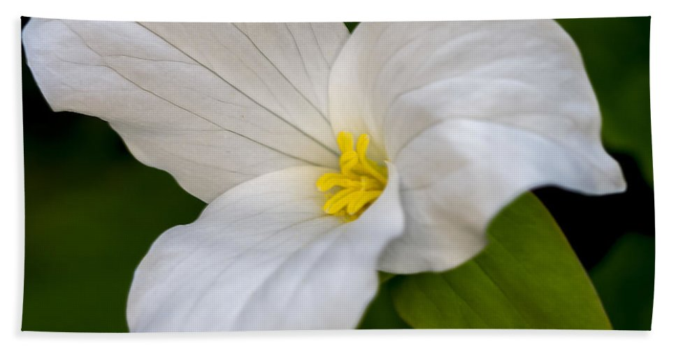 White Hand Towel featuring the photograph Sweet White Trillium 5 by Jack R Perry