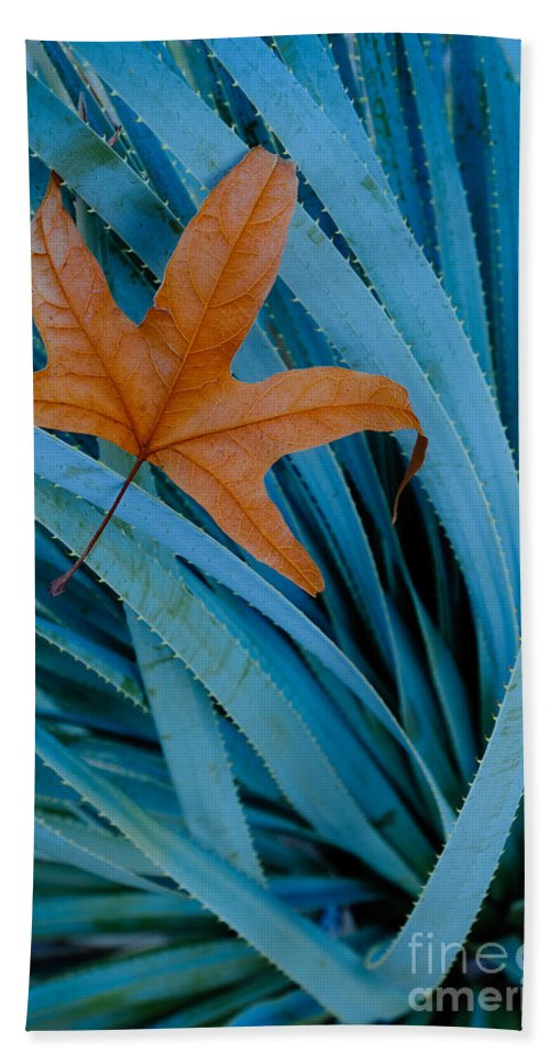 Nature Bath Sheet featuring the photograph Sycamore Leaf And Sotol Plant by John Shaw