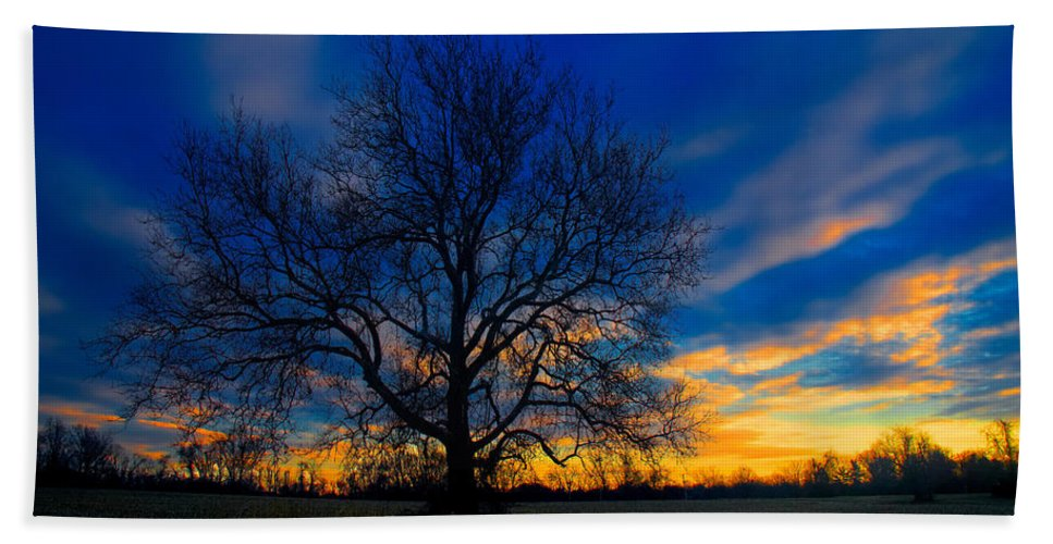 Tree Hand Towel featuring the photograph Sycamore Sunset by William Jobes