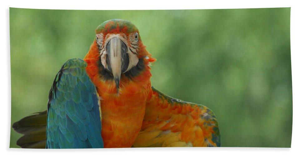 Parrot Bath Sheet featuring the photograph Ta Da by Donna Blackhall