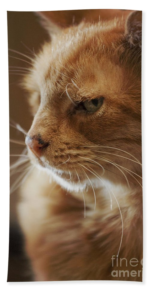 Cat; Fur; Whiskers; Sleepy; Lazy; Cute; Adorable; Looking; Mammal; Animal; Feline; Tabby; Orange; Pet; Profile; Close Up; Furry; Green Eyes Hand Towel featuring the photograph Tabby by Margie Hurwich