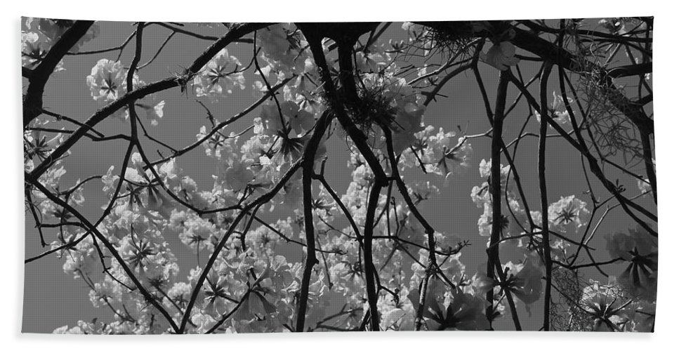 Black And White Hand Towel featuring the photograph Tabebuia Tree 1 by Denise Mazzocco