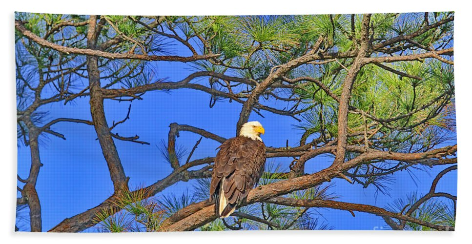 Bald Eagle Bath Towel featuring the photograph Taking A Nest Break by Deborah Benoit