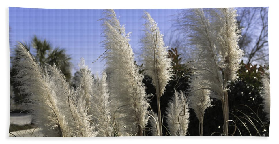 Pampas Grass Hand Towel featuring the photograph Tall Wispy Pampas Grass by Dale Powell
