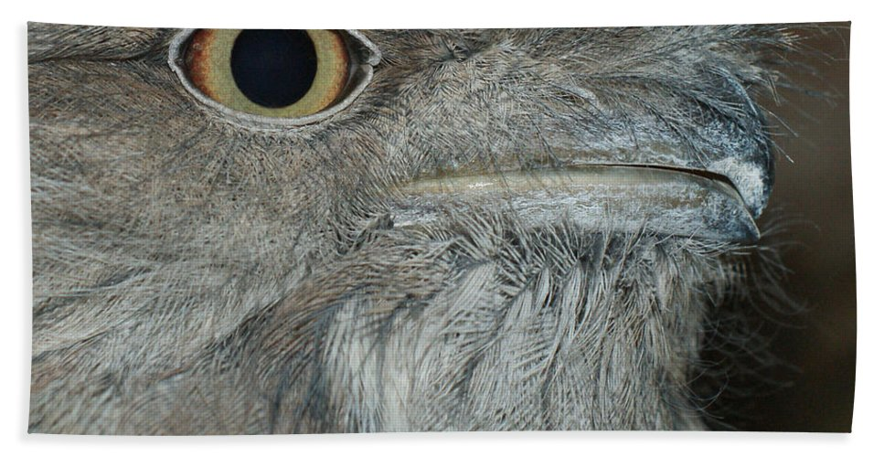 Tawny Frogmouth Hand Towel featuring the photograph Tawny Frogmouth by Ernie Echols