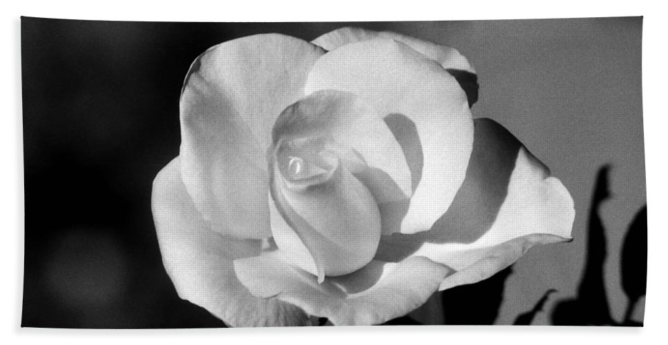 Rose Bath Sheet featuring the photograph Tea Rose 01 - Infrared by Pamela Critchlow