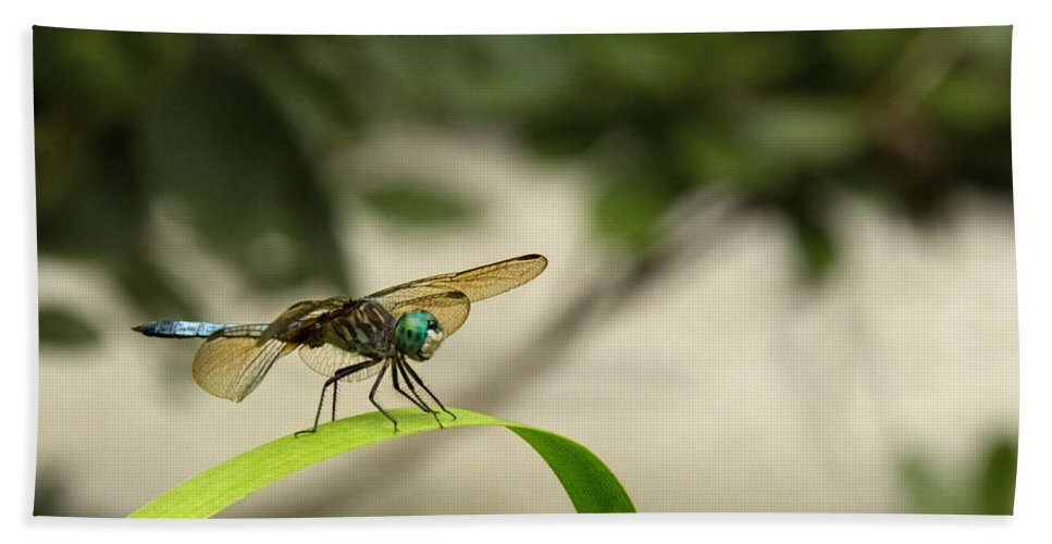 Teal Dragonfly Hand Towel featuring the photograph Teal Dragonfly by Jemmy Archer