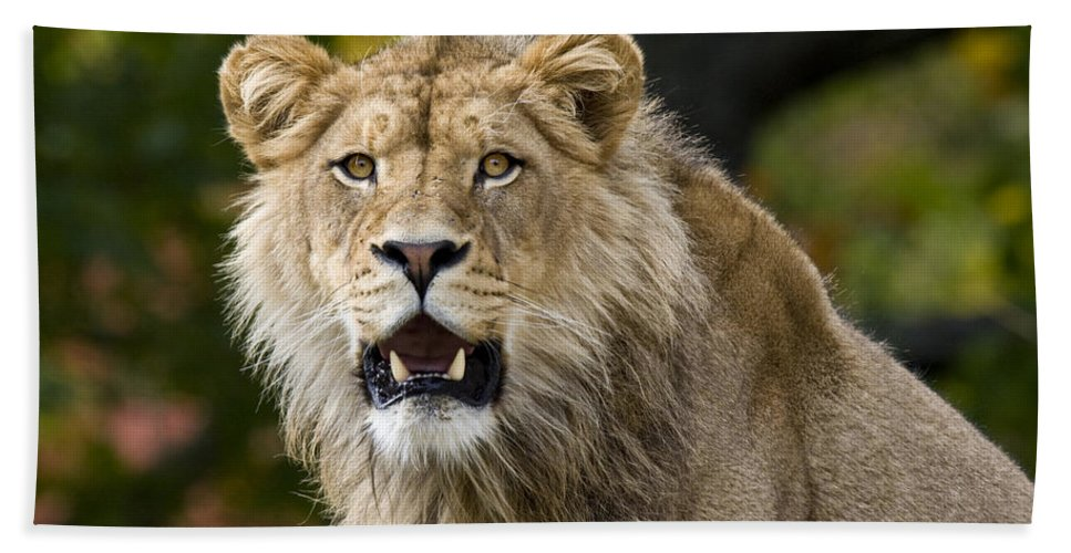 Teenage King Of The Beast Bath Sheet featuring the photograph Teenage King Of The Beast by Wes and Dotty Weber