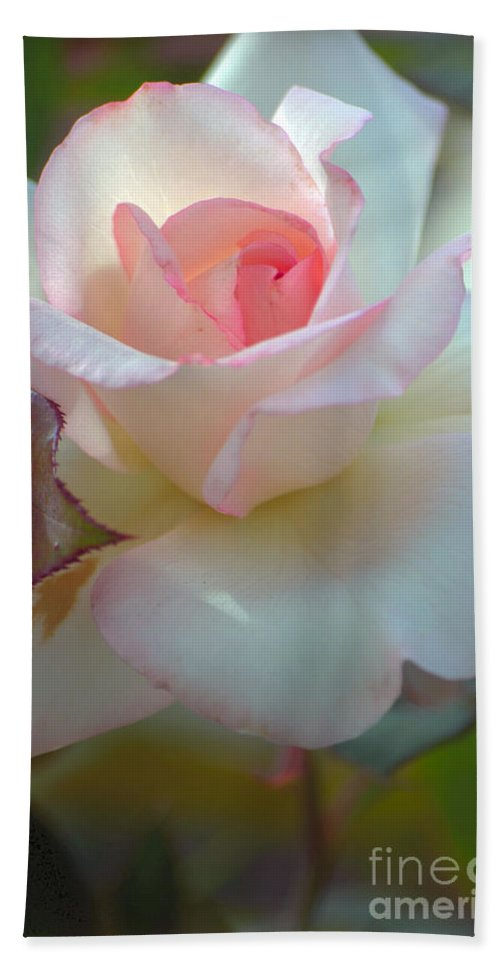 Rose Hand Towel featuring the photograph Tenderness by Deb Halloran