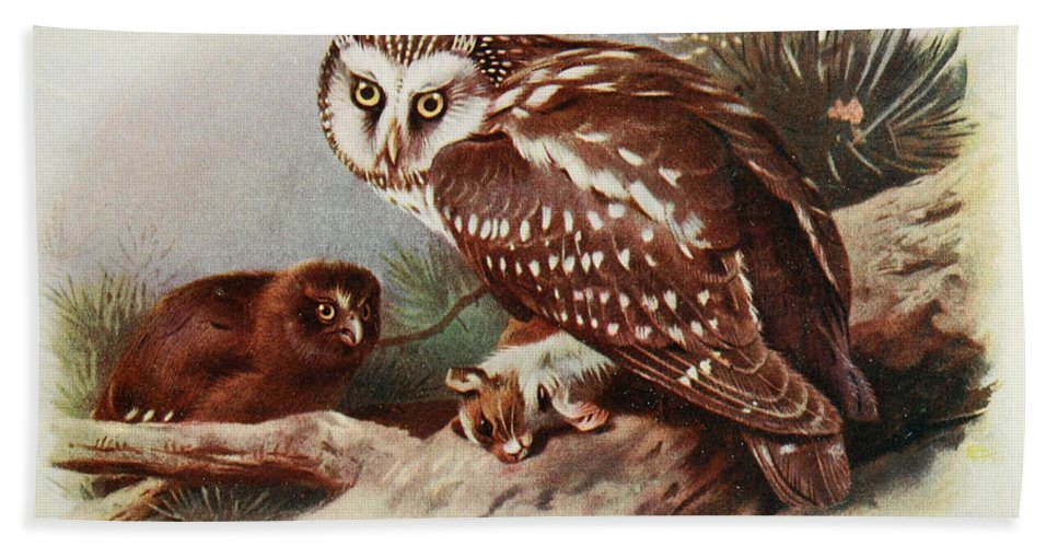 Tengmalm Hand Towel featuring the painting Tengmalms Owl by Philip Ralley