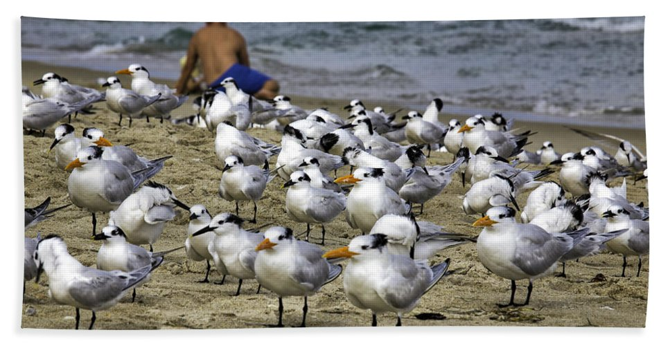 Landscape Hand Towel featuring the photograph Terns by Fran Gallogly