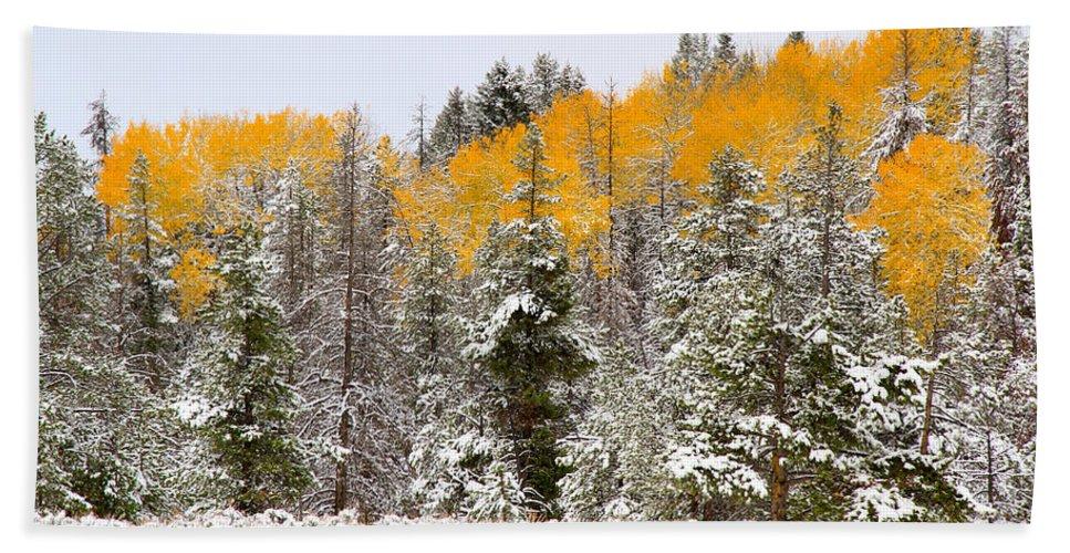 Trees Bath Sheet featuring the photograph Teton Aspens by Ed Riche