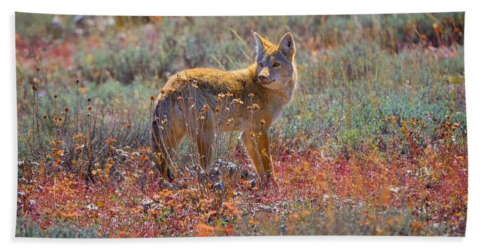 Coyote Bath Sheet featuring the photograph Teton Coyote by Greg Norrell