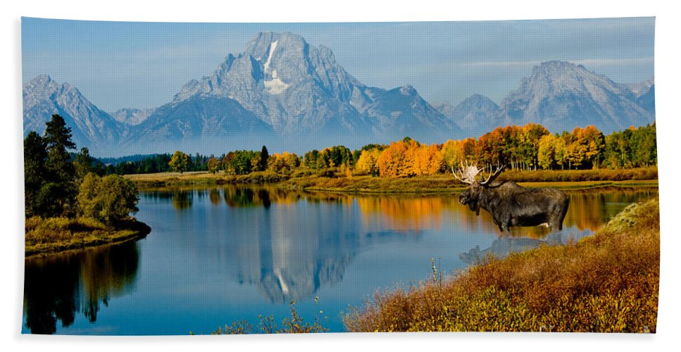 Outdoors Hand Towel featuring the photograph Tetons With Moose by Anthony Mercieca