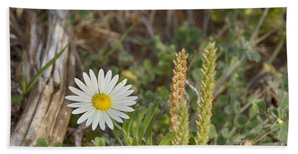 Wildflowers Hand Towel featuring the photograph Texas Wildflowers V5 by Douglas Barnard