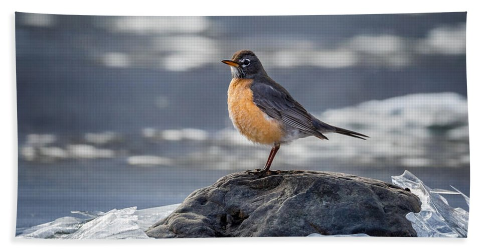 Robin Hand Towel featuring the photograph The American Robin by Bill Wakeley