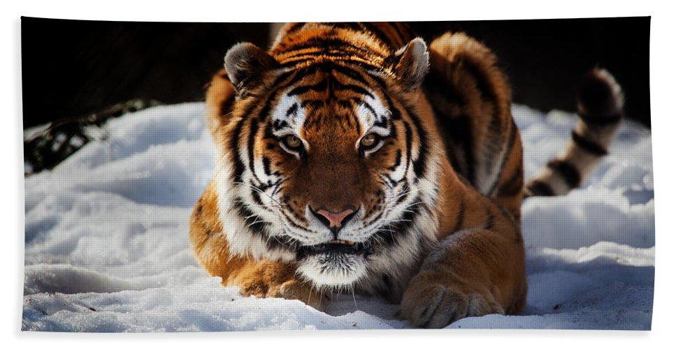 Precious Bath Sheet featuring the photograph The Amur Tiger by Karol Livote